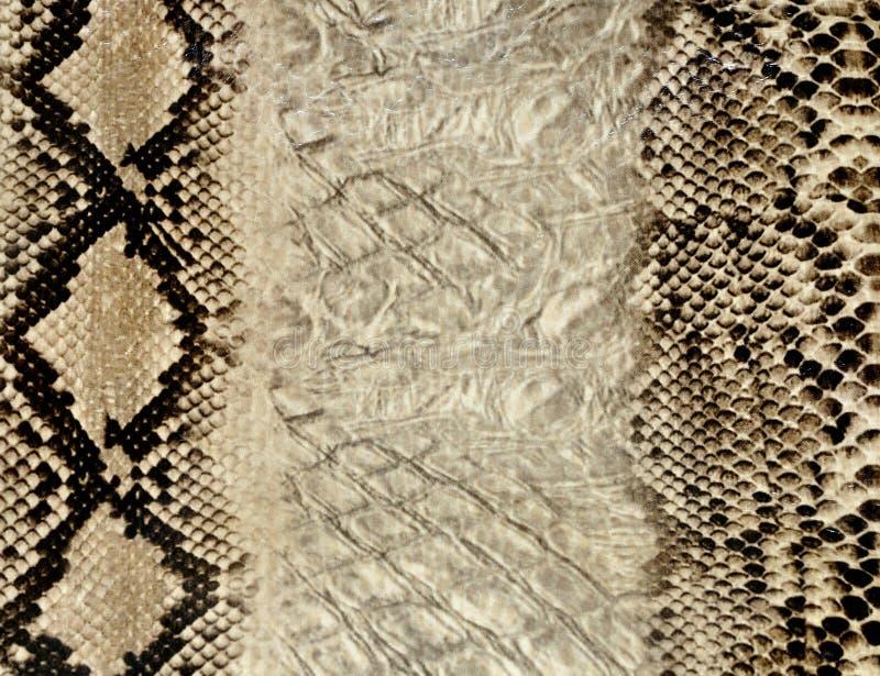 skóry węża tekstura zdjęcia royalty free