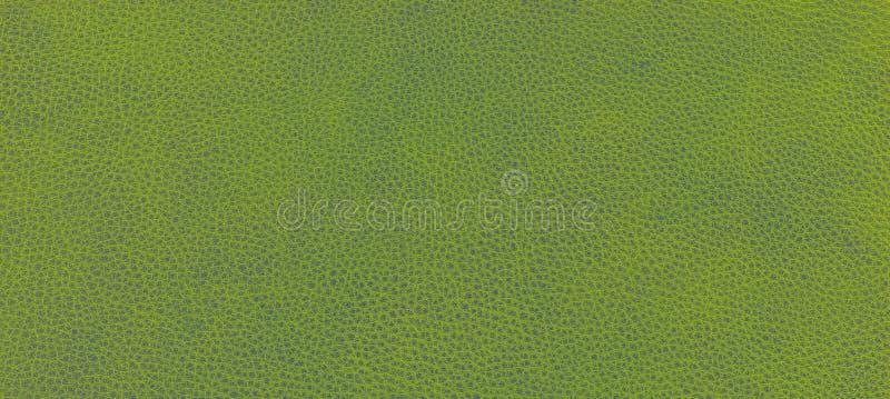 Skóry zielona tekstura obrazy royalty free
