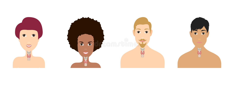 Sköldkörtel- och luftstrupeintrig som visas på en kontur av män och kvinnor Symbol f?r m?nniskokropporgananatomi l?karunders?knin royaltyfri illustrationer