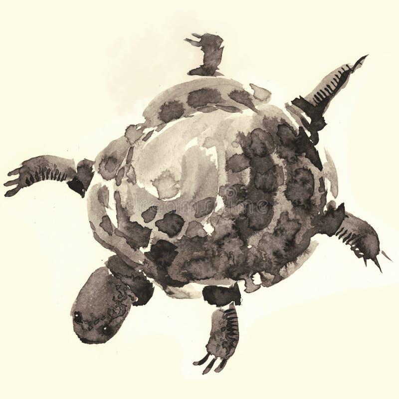 Sköldpadda vektor illustrationer