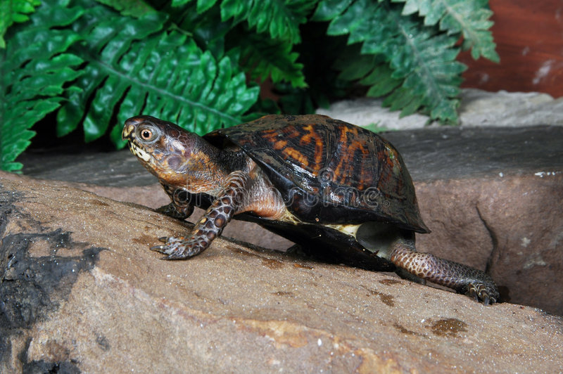 sköldpadda 5 royaltyfri bild