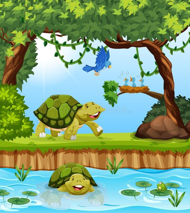 Sköldpadda i djungeln stock illustrationer