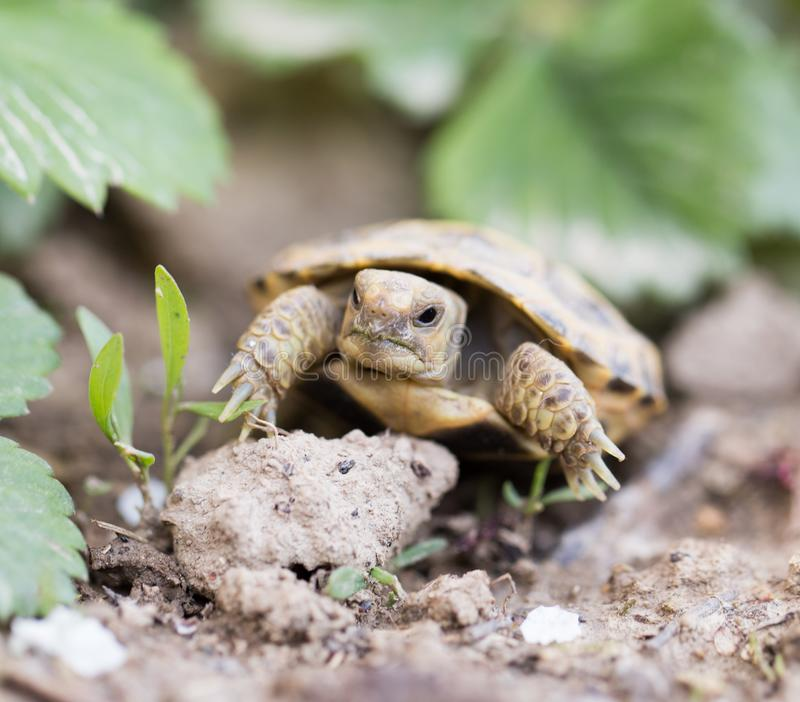 Sköldpadda i natur royaltyfri fotografi