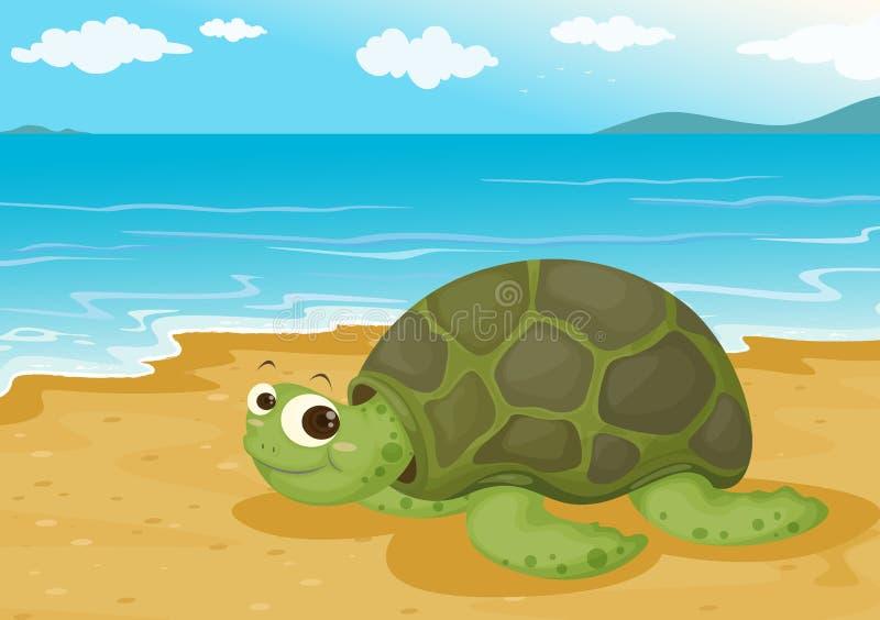 Sköldpadda på havskust stock illustrationer