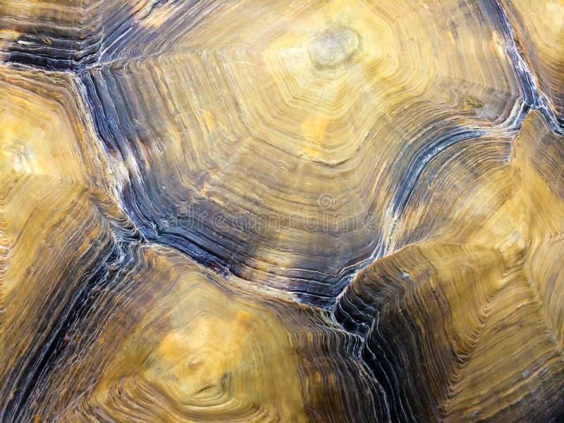 Sköldpadda Shell Detail arkivbild