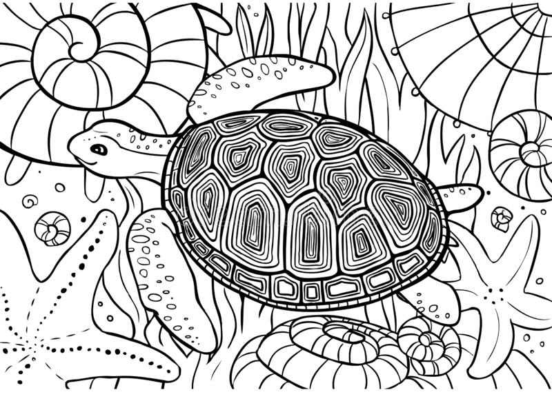 Sköldpaddabad som färgar sidan med skal, sjöstjärnan och havsväxt stock illustrationer
