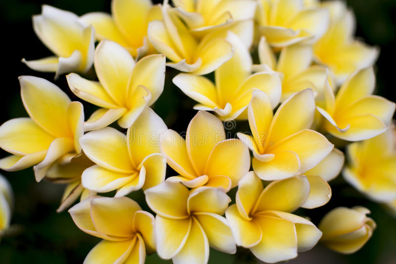 skönhet av blomman royaltyfri foto