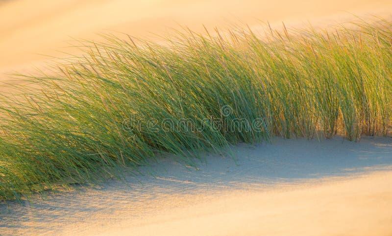 Skönhet av gräs och sand royaltyfri bild