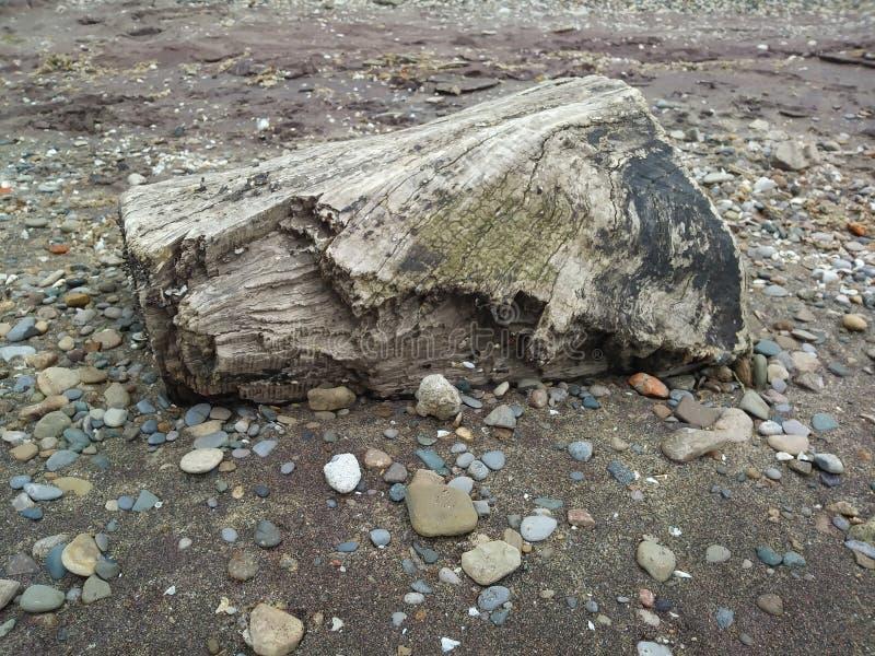 Skönhet av Greaten Lakes royaltyfri bild
