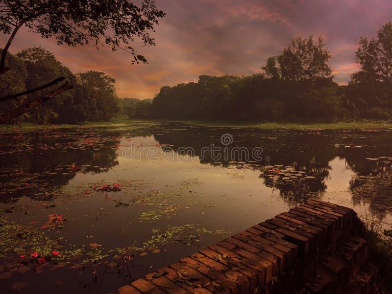 Skönhet av naturen arkivbilder