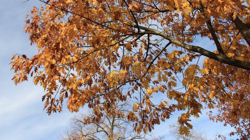 Skönhet av naturen färgrika Autumn Leaves royaltyfri foto