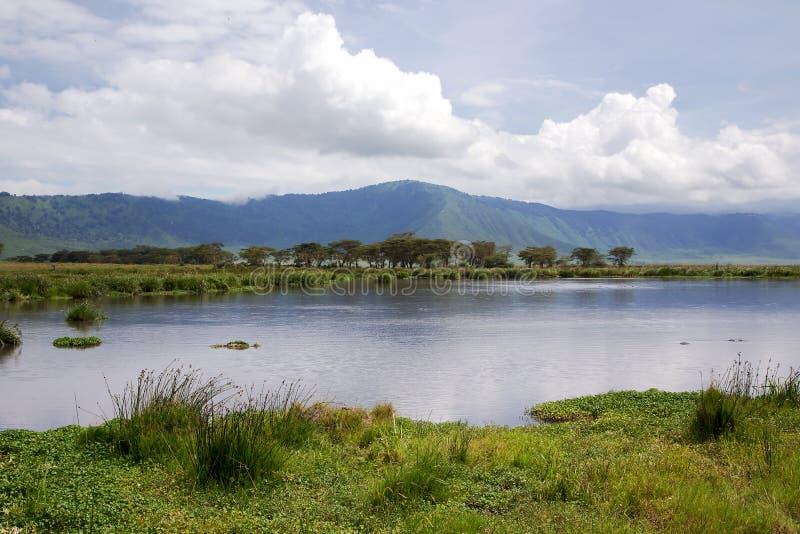 Skönhet av naturen nära sjön Manyara med flodhästar royaltyfri fotografi