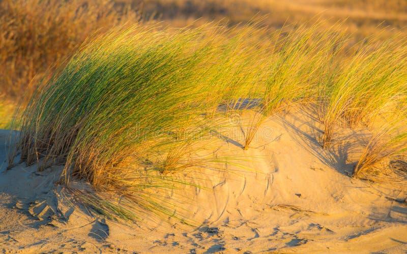 Skönhet av sand och växter royaltyfri bild
