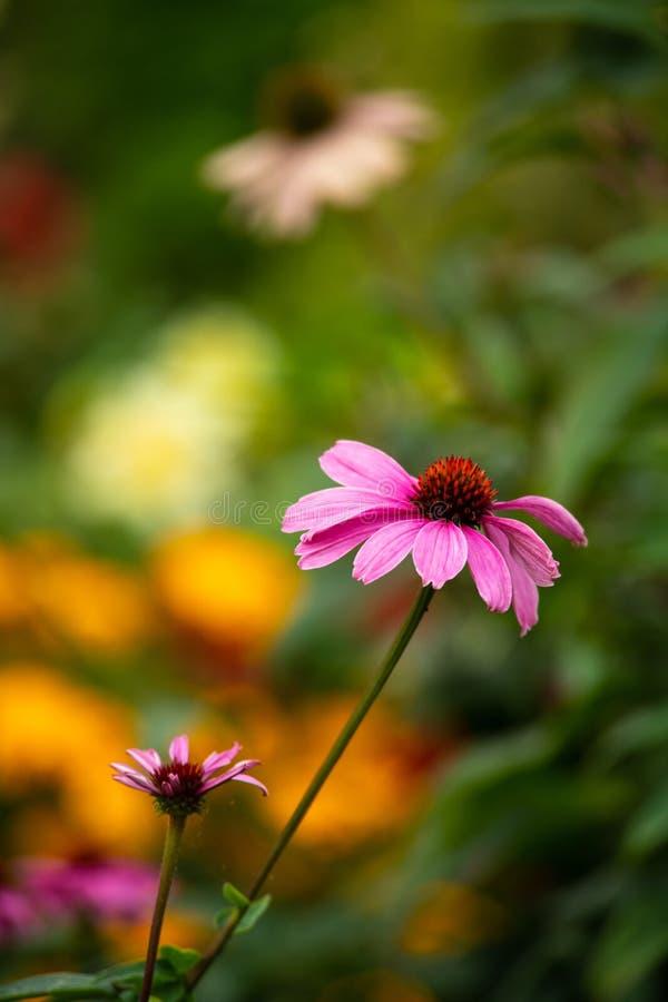Skönhet för flora för natur för solig dag för sommarblommor arkivbild