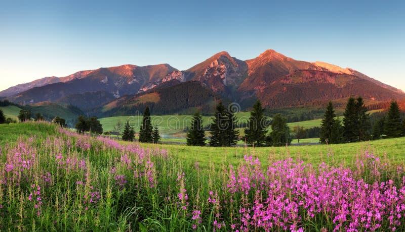 Skönhetbergpanorama med blommor - Slovakien arkivbild