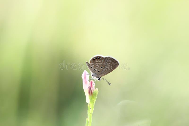 Skönheten av fjärilar royaltyfria bilder