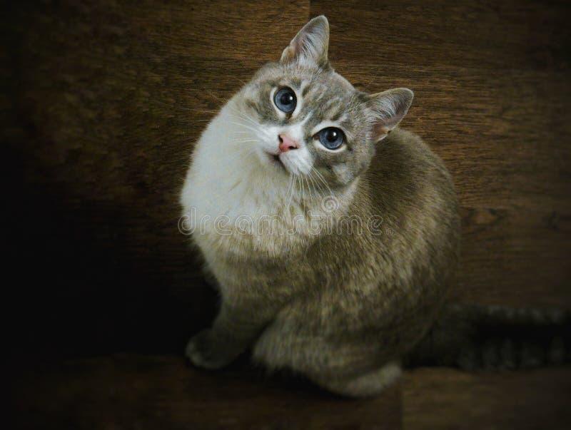 Skönheten av katter är omöjlig att stanna arkivfoto