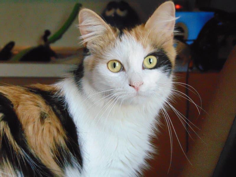 Skönheten av katter arkivfoto