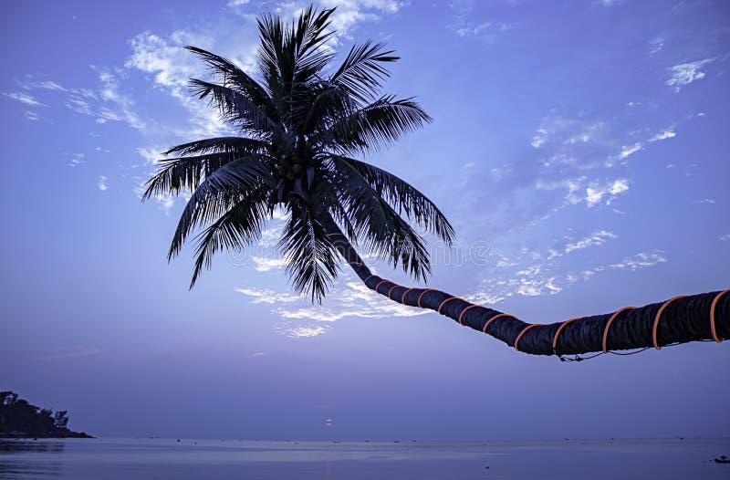 Skönheten av solnedgånghavet under kokosnöten gömma i handflatan på den Haad salladstranden, koh Phangan royaltyfri fotografi