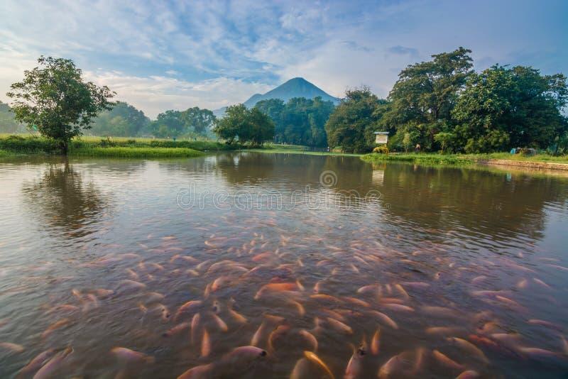 skönheten av vårvatten, mojokerto, East Java, indonesia arkivbilder