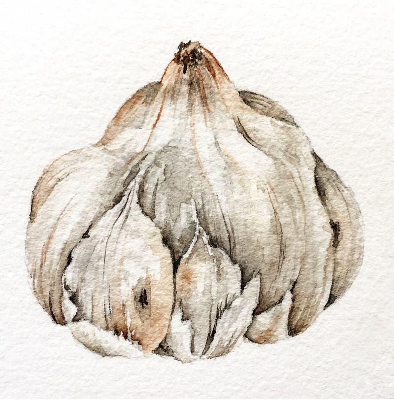 Skönheten av vitlök - för en trevlig kökgarnering och mer arkivbilder