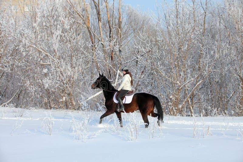 Skönhetflicka som rider hennes häst till och med snöfält royaltyfria foton