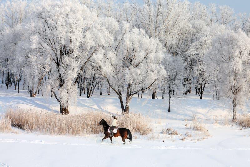 Skönhetflicka som rider hennes häst till och med snöfält royaltyfri bild