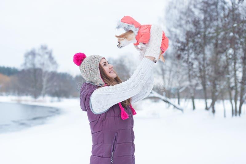 Skönhetflicka som spelar med chihuahuaen för liten hund royaltyfri fotografi