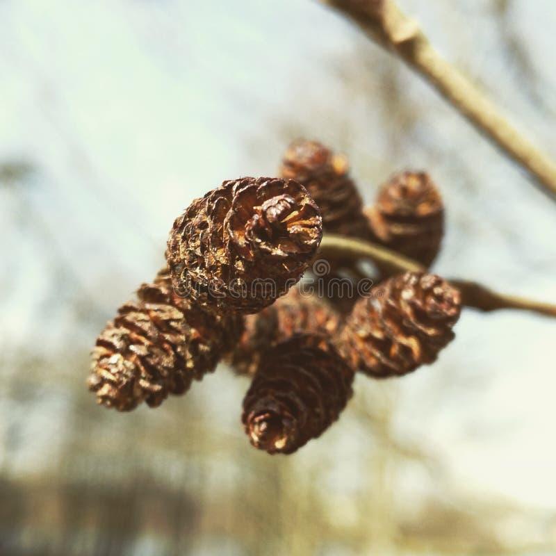 skönhetnaturegenheten rotar treen royaltyfri bild