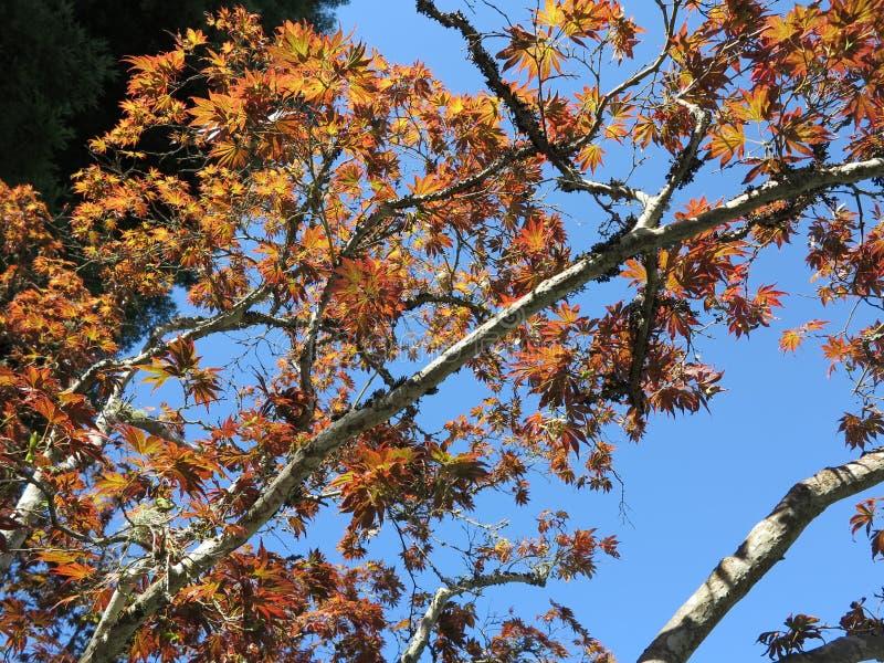skönhetnaturegenheten rotar treen fotografering för bildbyråer