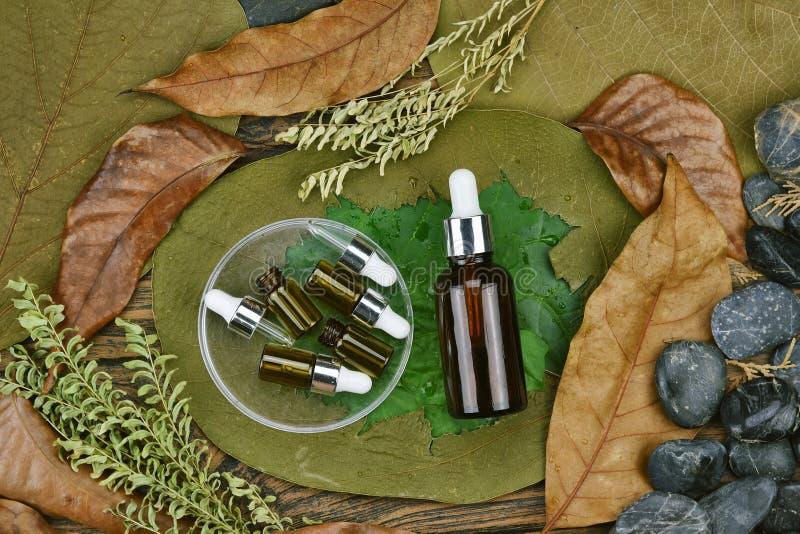 Skönhetsmedel vid den rena naturliga växten, organisk skönhetbrunnsortprodukt på det gröna bladet, Skincare tom flaska som förpac arkivfoto
