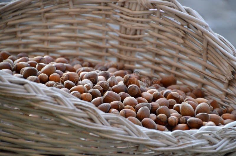Skörd av hasselnötter i den vita vide- korgen arkivfoto
