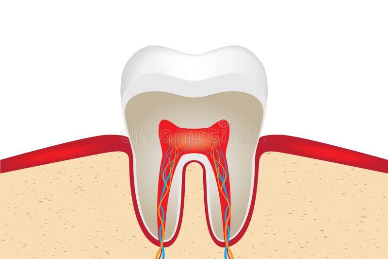 Skörd av tanden royaltyfri illustrationer