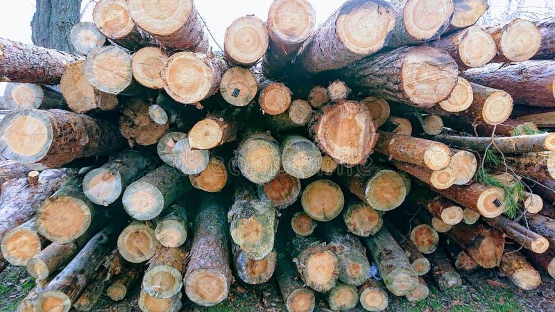 Skörda en tallskog vid en sågkvarn och skicka trä royaltyfri foto