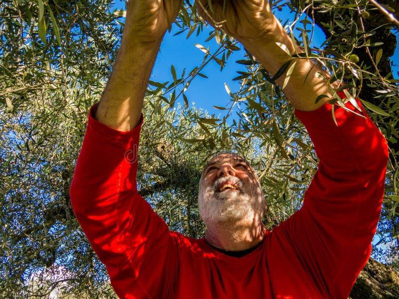 skörda olivgrön
