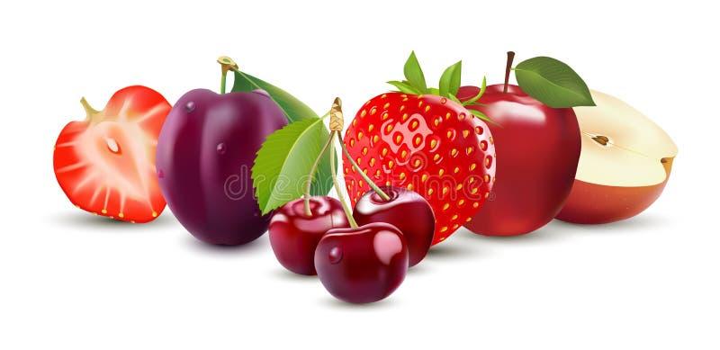 Skörda saftig frukt och bär, vektorillustration på vit Jordgubbe, Apple, plommon och körsbär royaltyfri illustrationer