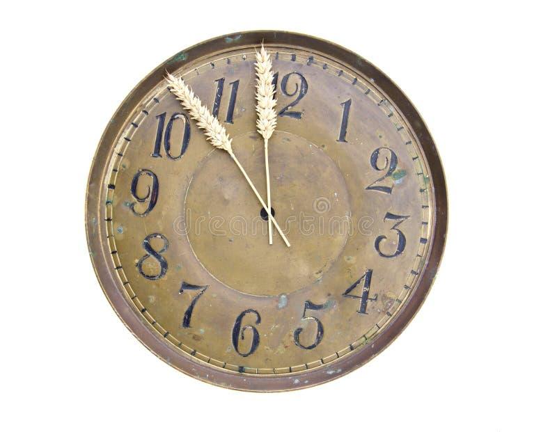 Skörda tid begrepp-tar tid på visartavlan med vete gå i ax royaltyfria bilder