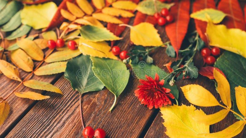 Skörda tid som den färgrika nedgången lämnar bär blommor arkivfoto