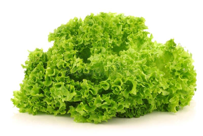 skördad grönsallatlollo för bionda nytt royaltyfri fotografi