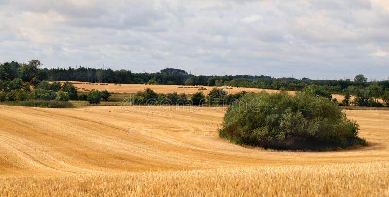 Skördade fält och träd fotografering för bildbyråer
