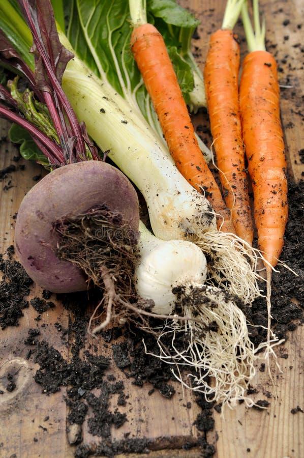 Download Skördade grönsaker arkivfoto. Bild av rödbeta, smutsa - 37348264