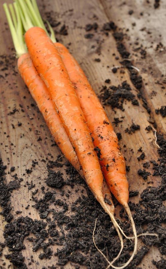 Download Skördade morötter arkivfoto. Bild av planka, vitaminer - 37348156