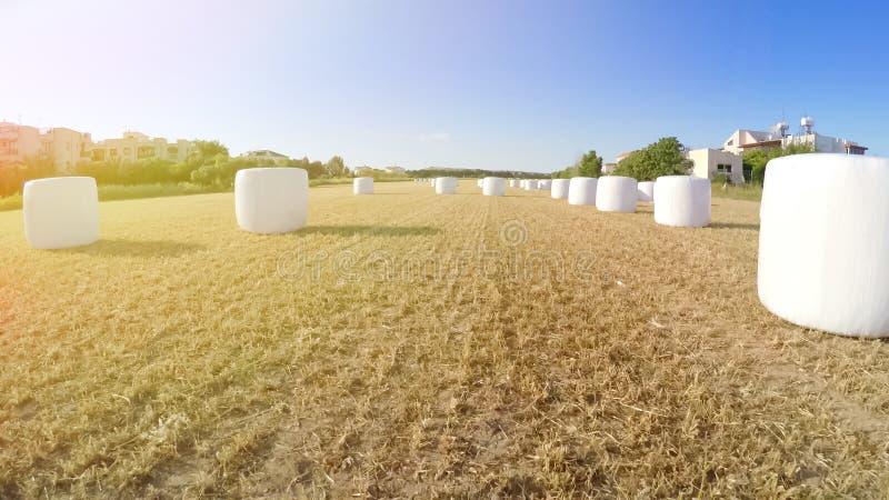 Skördat fält med sugrörbaler i landsbygd, jordbruk, härlig sikt royaltyfri bild