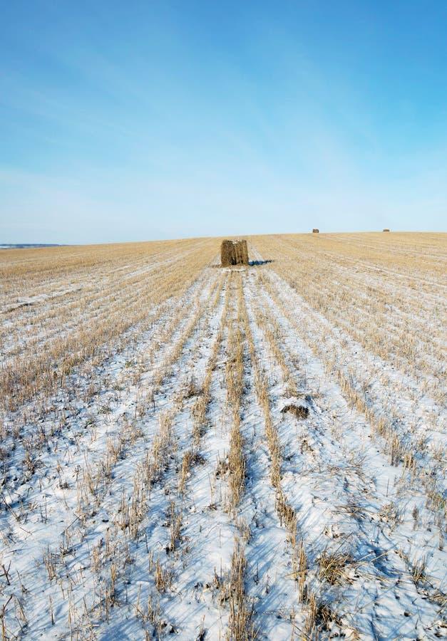 Skördat snöig jordbruks- fält med en rulle av mejat sugrör i ett avstånd arkivfoto