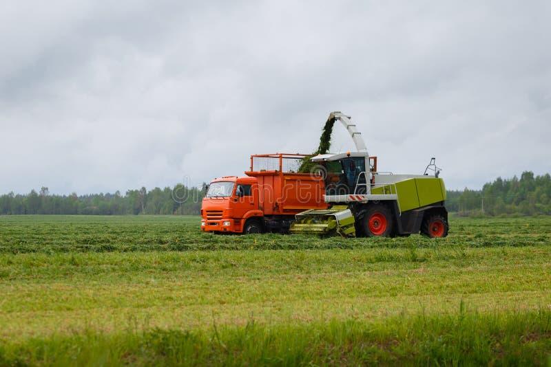 Skördearbetaren samlar torrt gräs royaltyfria bilder