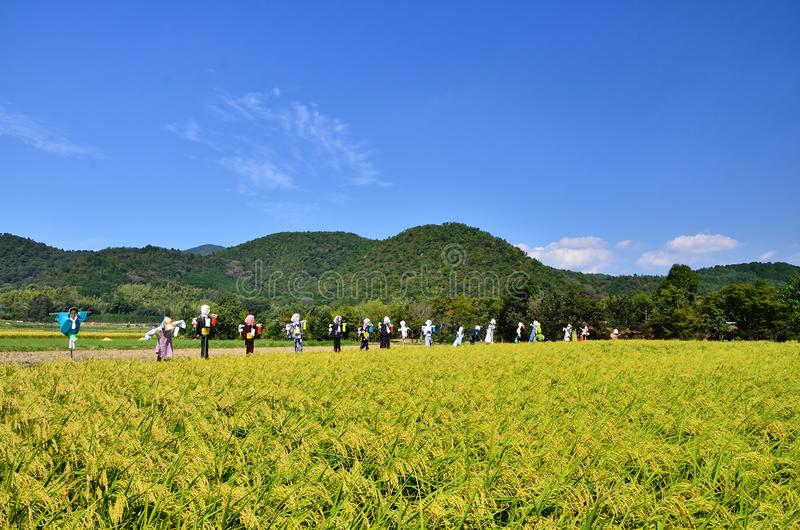 Skörden av ris brukar och fågelskrämmor, Japan royaltyfri bild