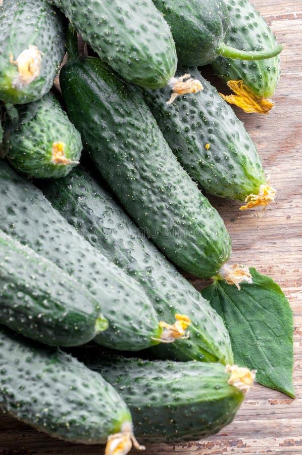 Skörden för gurkabakgrundsgurkan många gör grön gurkor Cucu arkivfoto
