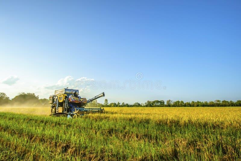 Skördetröskan skördar ris royaltyfria bilder