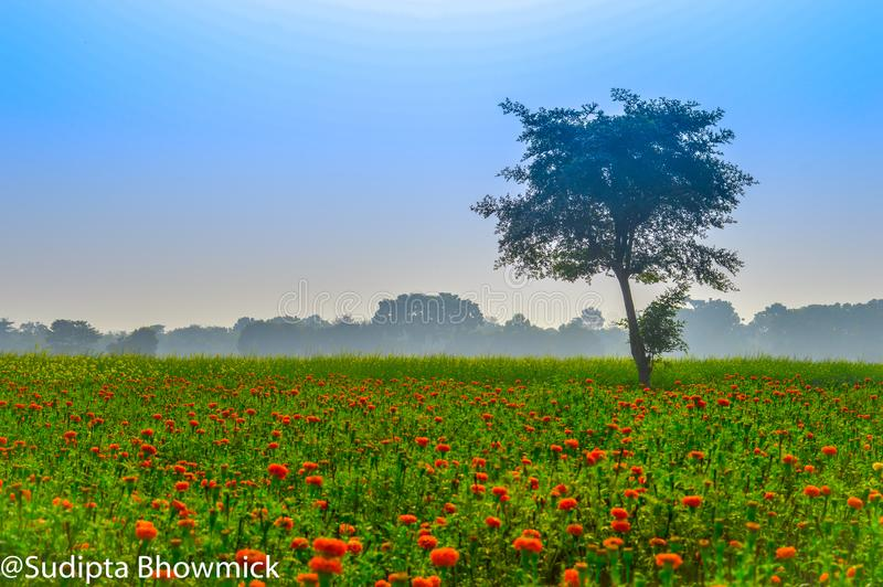 Skördfält fotografering för bildbyråer