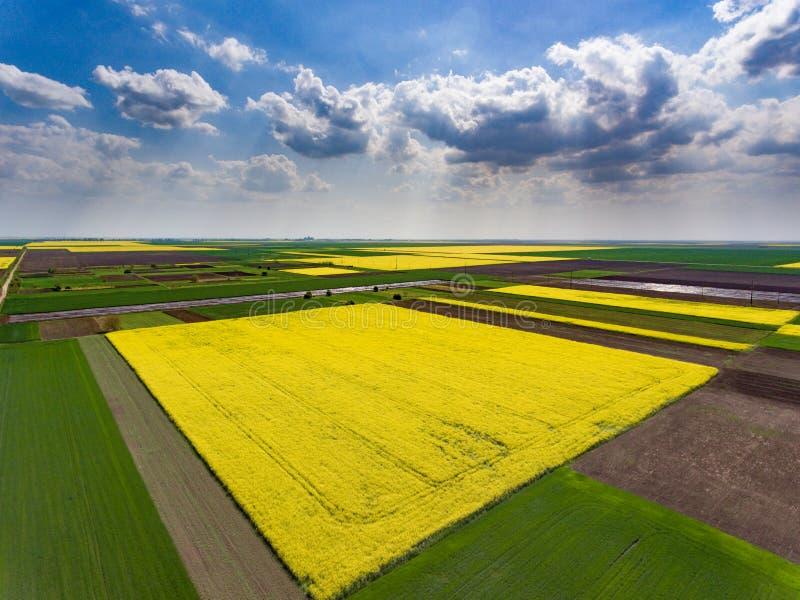 Skördfält med sojabönan flyg- sikt royaltyfria bilder